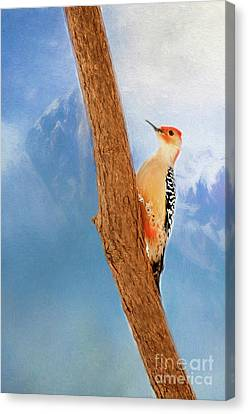 Canvas Print featuring the digital art Red Bellied Woodpecker by Darren Fisher