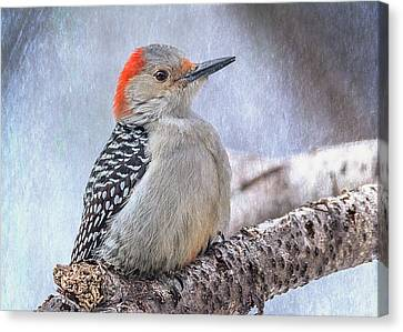Red-bellied Woodpecker Canvas Print by Patti Deters