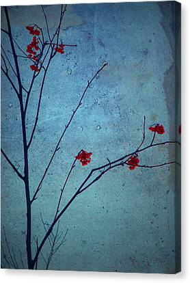 Red Berries Blue Sky Canvas Print by Tara Turner