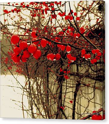 Red Berries In Winter Canvas Print