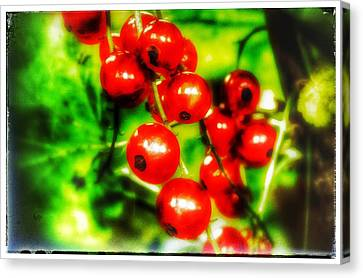 Canvas Print featuring the photograph Red Berries by Isabella F Abbie Shores FRSA