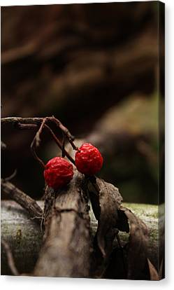 Red Berries Canvas Print by Melisa Gumbs