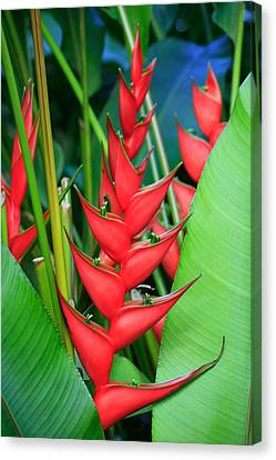 Red Bird Of Paradise Canvas Print by Stephen Mack