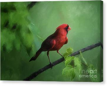 Canvas Print featuring the digital art Red Bird On A Hot Day by Lois Bryan