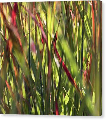 Red Blades Among The Green Canvas Print