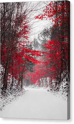 Winter Roads Canvas Print - Red Blossoms  by Parker Cunningham