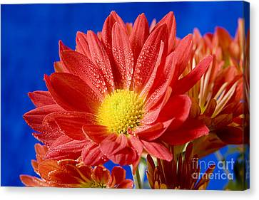Kenneth Johnson Canvas Print - Red Blue Contrast by Kenneth Johnson