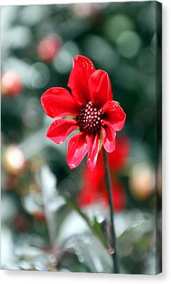 Red Bokeh2 Canvas Print by Carolyn Stagger Cokley