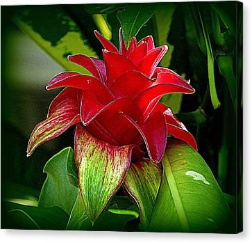Bromeliad Canvas Print - Red Bromeliad by Lori Seaman