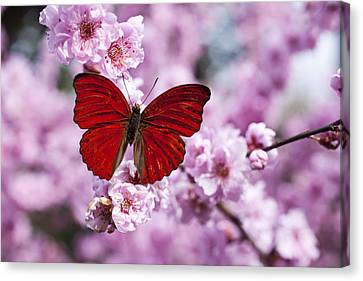 Activity Canvas Print - Red Butterfly On Plum  Blossom Branch by Garry Gay