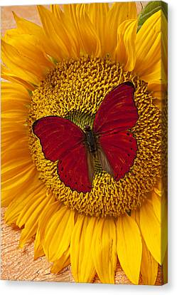 Red Butterfly On Sunflower Canvas Print by Garry Gay