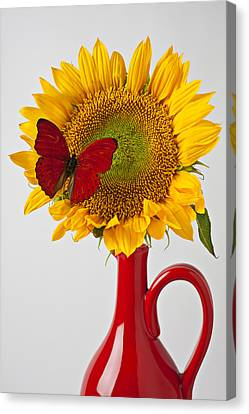 Red Butterfly On Sunflower On Red Pitcher Canvas Print