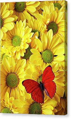 Distinctive Canvas Print - Red Butterfly On Yellow Mums by Garry Gay