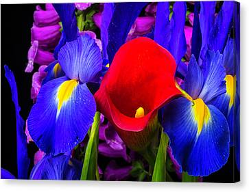 Red Calla Lily With Blue Iris Canvas Print by Garry Gay