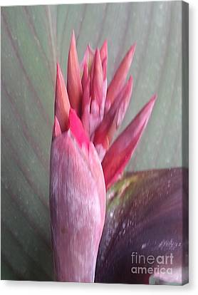 Red Canna Lily Canvas Print by Manuel Matas
