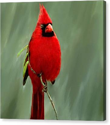Red Cardinal Painting Canvas Print