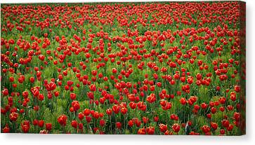 Canvas Print featuring the photograph Red Carpet by Tom Vaughan