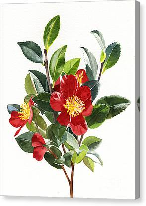 Red Christmas Camellias Canvas Print by Sharon Freeman