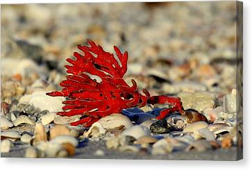 Red Coral Canvas Print by Sean Allen