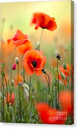 Red Corn Poppy Flowers 06 Canvas Print by Nailia Schwarz