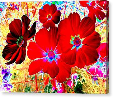 Red Cosmos Canvas Print by Will Borden