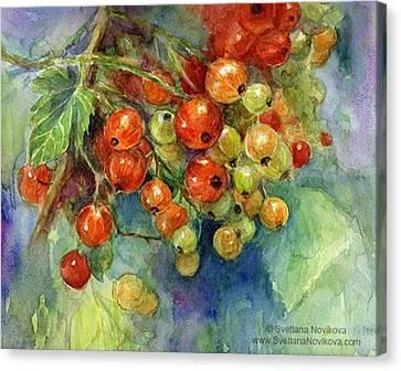 Canvas Print - Red Currants Berries Watercolor by Svetlana Novikova