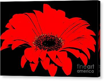 Red Daisy On Black Background Canvas Print by Marsha Heiken