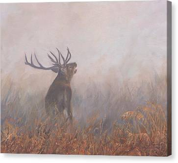 Canvas Print featuring the painting Red Deer Stag Early Morning by David Stribbling