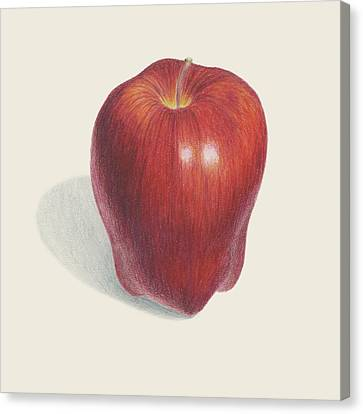 Red Delicious Apple  Canvas Print by Carlee Lingerfelt