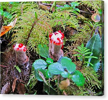 Red-dotted Mushroom Canvas Print by Sean Griffin