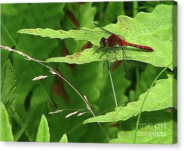 Canvas Print featuring the photograph Red Dragon by Deborah Johnson