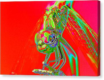 Red Dragon Canvas Print by Richard Patmore