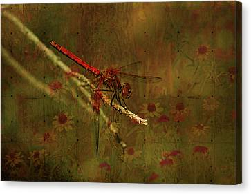 Red Dragonfly Dining Canvas Print by Bonnie Bruno