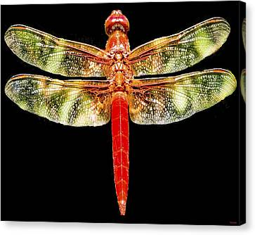 Red Dragonfly Canvas Print by Tony Grider