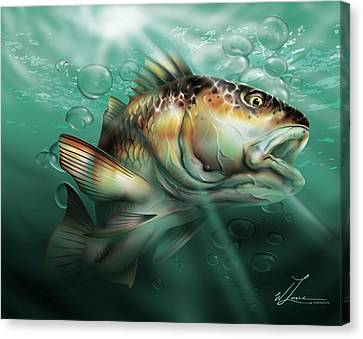 Red Drum Canvas Print