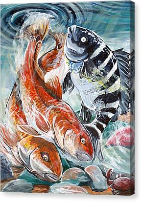 Red Drums And A Sheephead Canvas Print