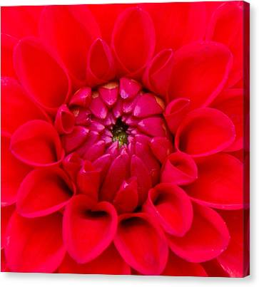 Red Embrace Canvas Print