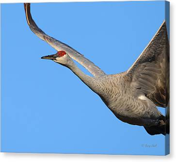 Canvas Print featuring the photograph Red Eye Flight by Gerry Sibell