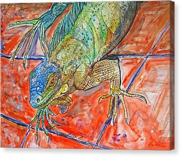 Red Eyed Iguana Canvas Print by Kelly     ZumBerge
