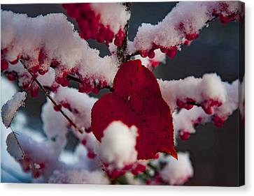 Red Fall Leaf On Snowy Red Berries Canvas Print