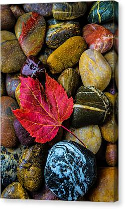 Red Fallen Leaf On River Stones Canvas Print by Garry Gay