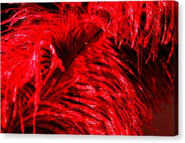 Canvas Print - Red Feather by Magdalena Green