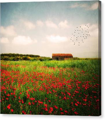 Red Field Canvas Print by Philippe Sainte-Laudy