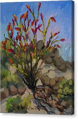 Red Flame Ocotillo 5 Canvas Print