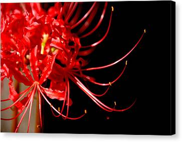 Red Flames Canvas Print by Susanne Van Hulst