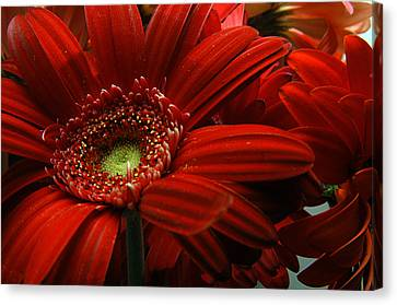 Red Floral Canvas Print by Clayton Bruster