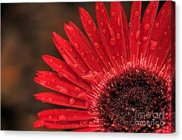 Red Flower 2 Of 2 Canvas Print