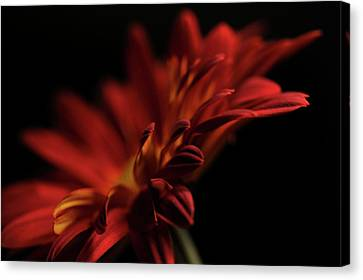 Canvas Print featuring the photograph Red Flower 5 by Sheryl Thomas