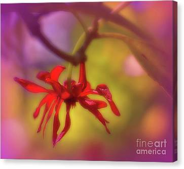 Red Flower Canvas Print by Judi Bagwell