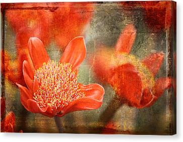 Quail Canvas Print - Red Flowers by Larry Marshall
